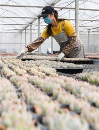 新冠疫情对中国农业农村经济的影响及政策建议
